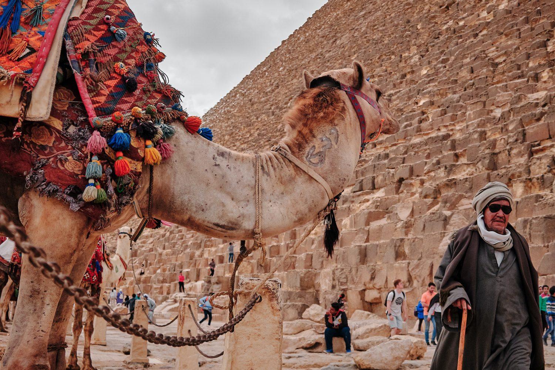 camello/vmoute