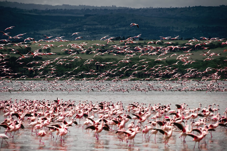 vomite.com/Lago Nakuru